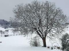 Neve sulle colline a Borgo Catena di Senigallia - Foto Angelica Di Stora