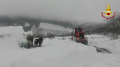 Vigili del Fuoco mettono in salvo 20 cavalli a Sassoferrato