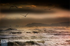 'In volo su un paesaggio marino' di Paolo Gresta
