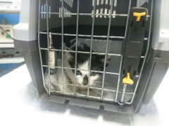Una gattina abbandonata e ricoverata