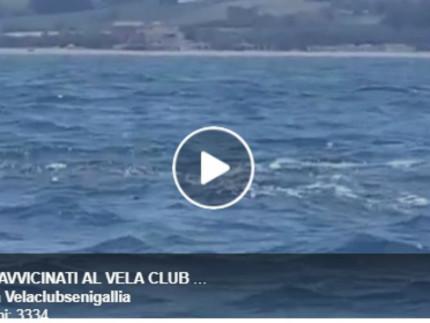 Il video dei delfini