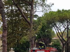 Ramo spezzato su viale A. Garibaldi, intervento dei Vigili del Fuoco