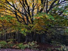 alberi, boschi, piante, natura