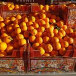 Le arance di Sicilia in Bocca, via Cellini 16 - Senigallia
