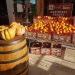 Arance e zucche di Sicilia in Bocca, via Cellini 16 - Senigallia