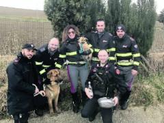 I cani fuggiti recuperati delle autorità