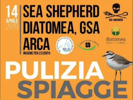 Pulizia della spiaggia, organizzata dalle associazioni Sea Shepherd, Diatomea, GSA e Arca