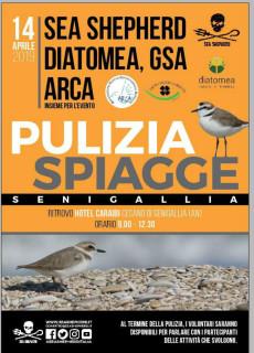 Pulizia della spiaggia, organizzata dalle associazioni Sea Shepherd, Diatomea, GSA e Arca - locandina