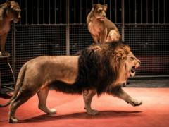 Animali del circo, circo