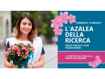 Azalea 2019