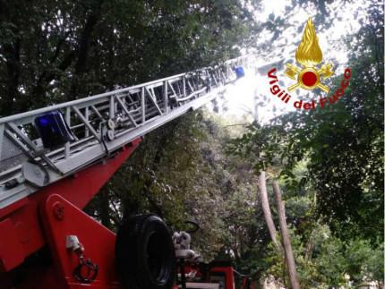 intervento dei Vigili del Fuoco per la rimozione di alberi caduti