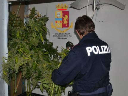 Operazione antidroga della Polizia Maxi sequestro di marijuana