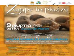 """""""Zampe in piazza"""""""