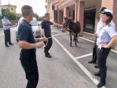 Mulo a San Severino