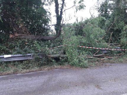 Strada interrotta da albero caduto
