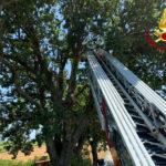rimozione di alberi o rami pericolanti da parte dei Vigili del Fuoco