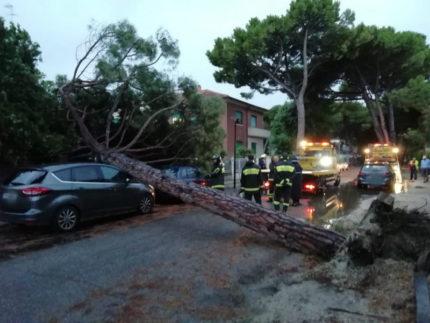albero si abbatte su due auto in viale Anita Garibaldi