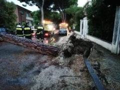 Pino caduto domenica 28 luglio 2019 in viale Garibaldi a Senigallia