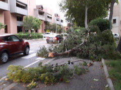 Rami di pini caduti in via Capanna