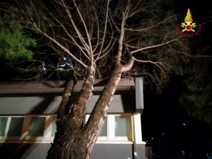 Albero caduto a Senigallia per il forte vento