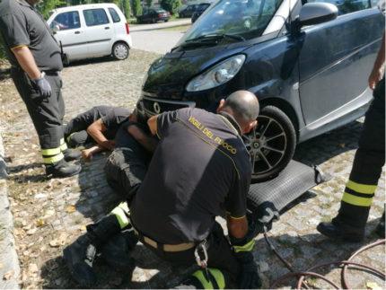 micio incastrato nel motore di un'auto salvato dai Vigili del Fuoco