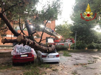 Albero caduto su due auto a Marzocca