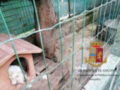 Animali maltrattati