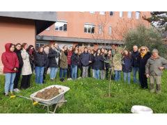"""Albero di ulivo piantato presso il Liceo delle Scienze Umane ed Economico Sociale """"Giulio Perticari"""""""