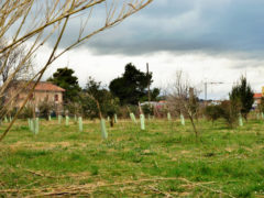 Lo stato di alcune piantumazioni al Parco della Cesanella