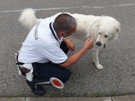 cane ritrovato