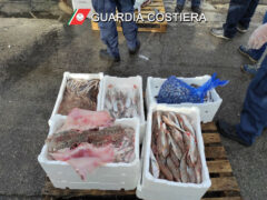 Pesce, controlli, pesca