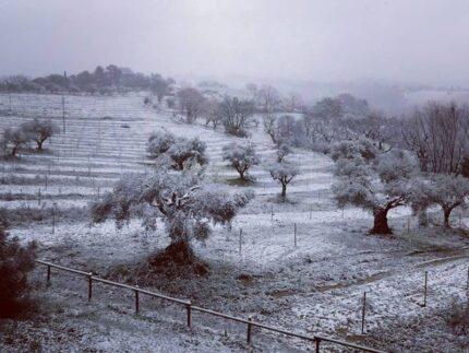 Spolverata di neve a Scapezzano di Senigallia - Foto Francesco Cucchi