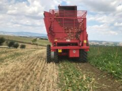 barbabietola, agricoltura