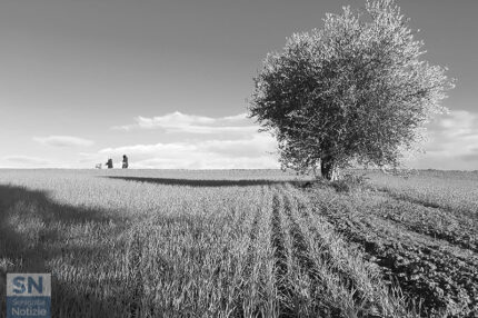 Foto di Elisabetta Saraga