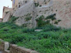Incuria sulle mura di Castelleone di Suasa