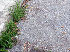 Giardino del Perticari di Senigallia pieno di mozziconi di sigarette