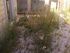 Erba non tagliata al cimitero delle Grazie a Senigallia