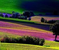 03/08/2020 - Paesaggio marchigiano