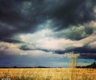04/08/2020 - Grano sotto le nuvole
