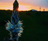 19/08/2020 - Sole dietro il fiore