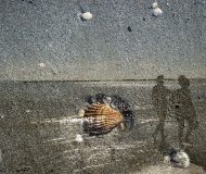 23/08/2020 - Conchiglia in riva al mare