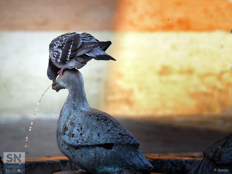 13/01/2021 - La fontana delle oche
