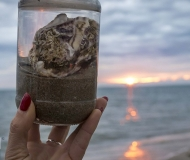 12/01/2021 - La spiaggia in un vasetto