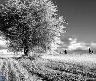 15/01/2021 - Passeggiata in bianco e nero