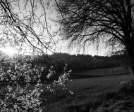 17/06/2020 - La primavera che sboccia