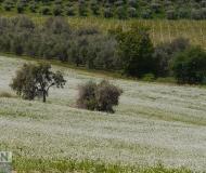 19/06/2020 - Campagna a Monte San Vito
