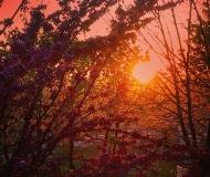 06/05/2020 - Sole tra i rami