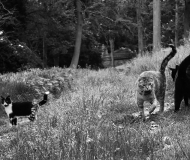 22/05/2020 - Gatti al cimitero