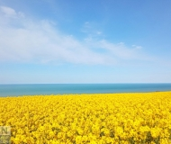 29/05/2021 - Marea gialla