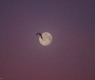 05/03/2021 - Luna mattutina